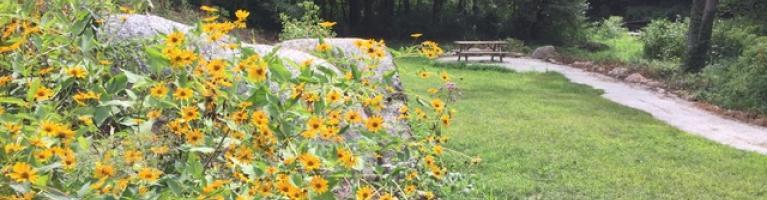 Flowers in Warren